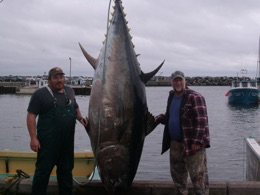 Tuna fever fishing charters canada s premier giant bluefin for Fishing shows on discovery channel